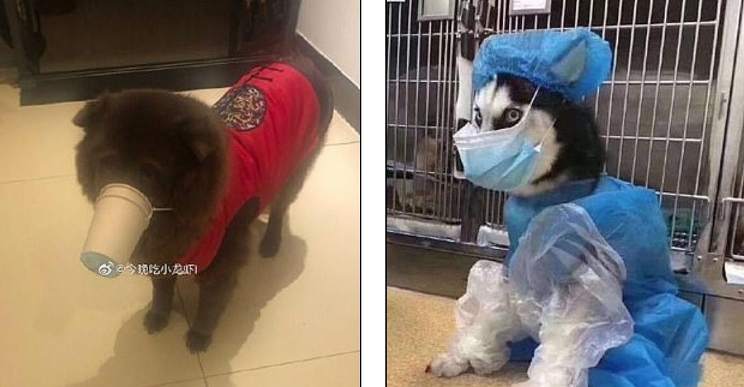 Chinese pet owners are creating makeshift coronavirus ...