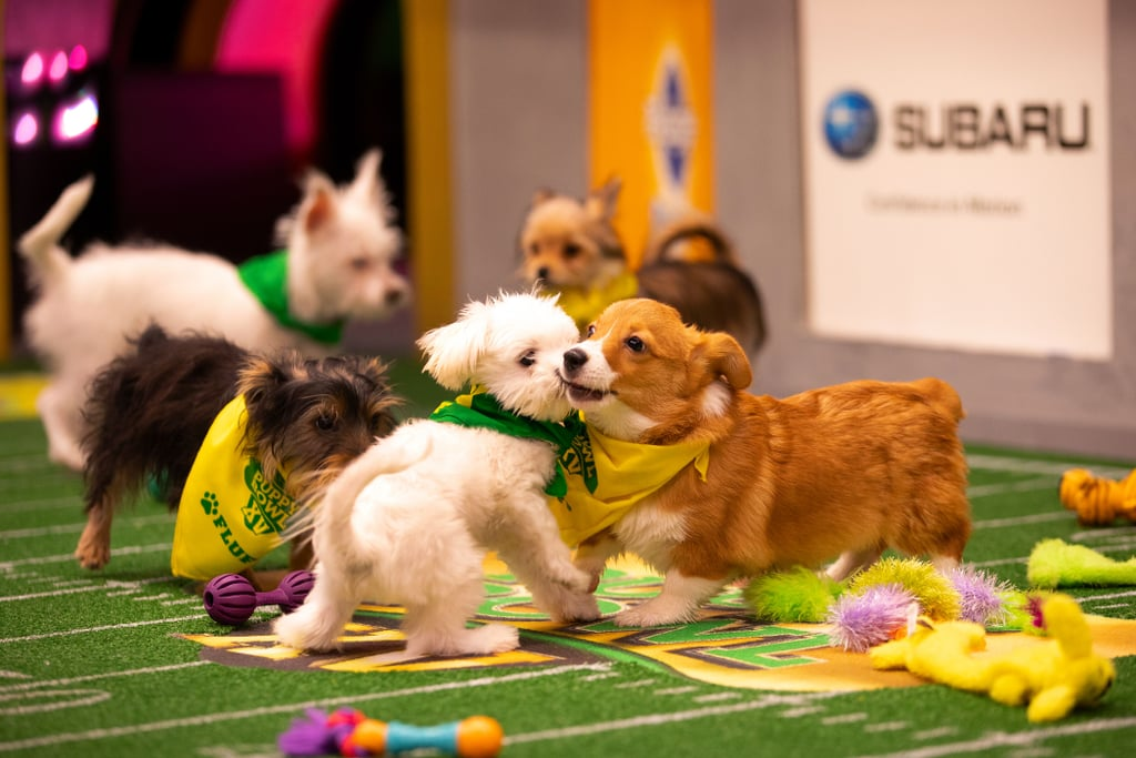 Things You Didn't Know About the Puppy Bowl | POPSUGAR Family