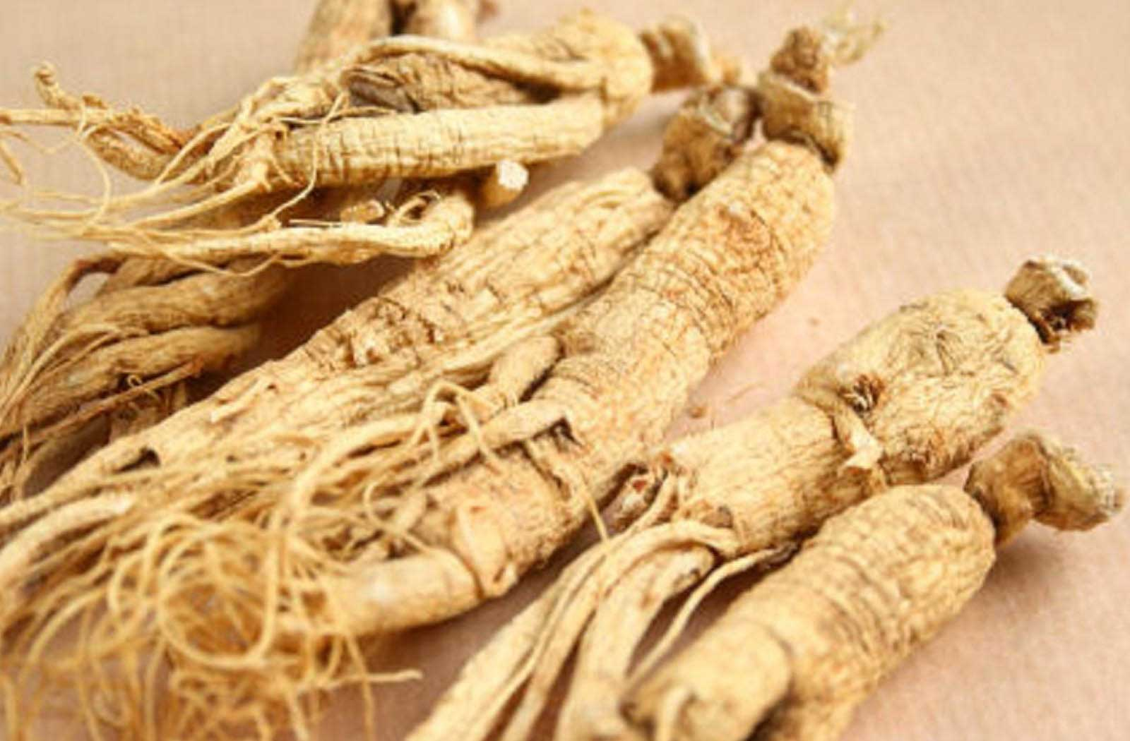 Eleuthero Root (Siberian Ginseng) an underrated Adaptogen