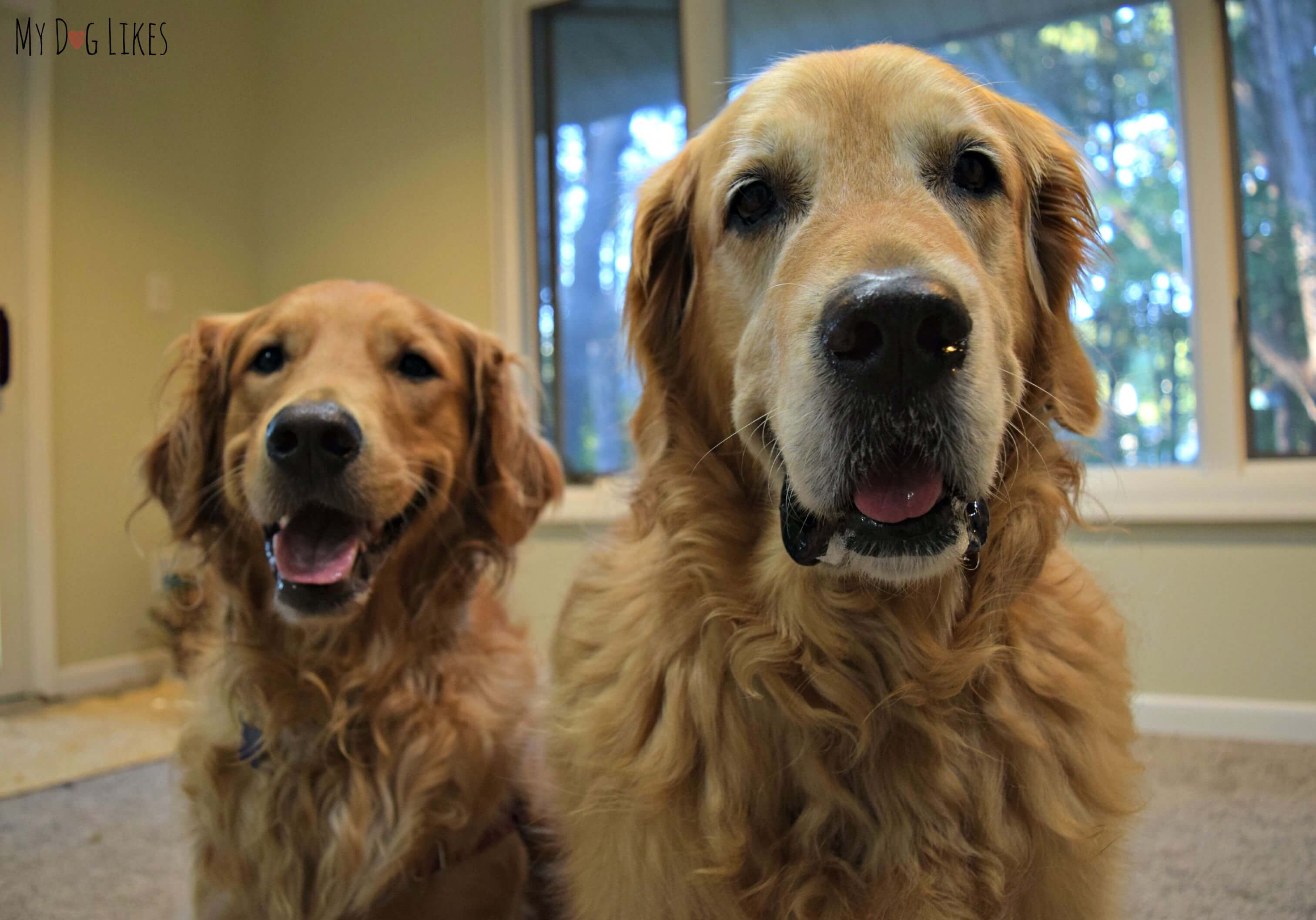 Look Who's Happy: Natural Goodness, Happy Dogs