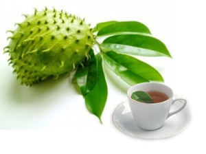 SourSop Tea and it's Health Benefits (Te Korosòl) - Haïtea