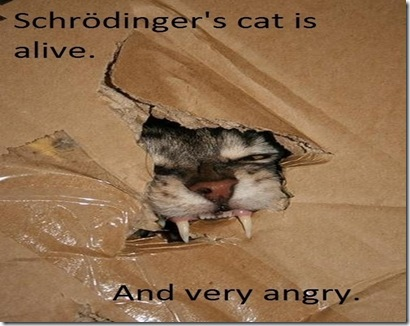 Really…. A cat can create a paradox? – Outside Perception