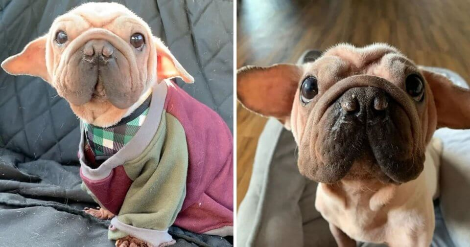 Meet Mork Skywalker, The Puppy Rescued From China Meat ...