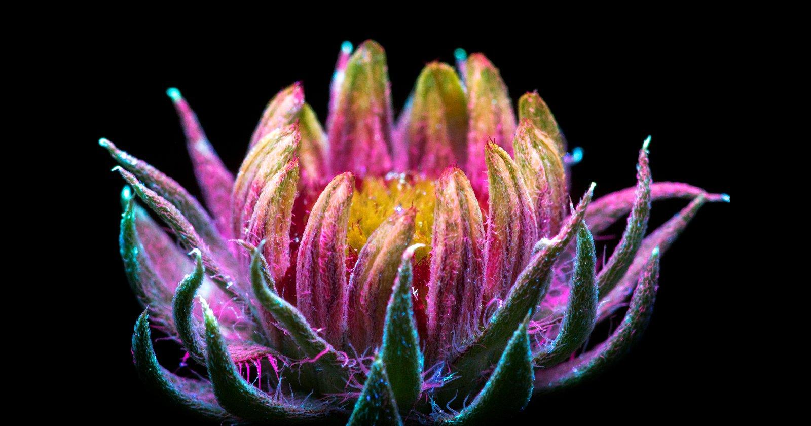 Sparkling Photos of Flowers Glowing Under Intense UV Light