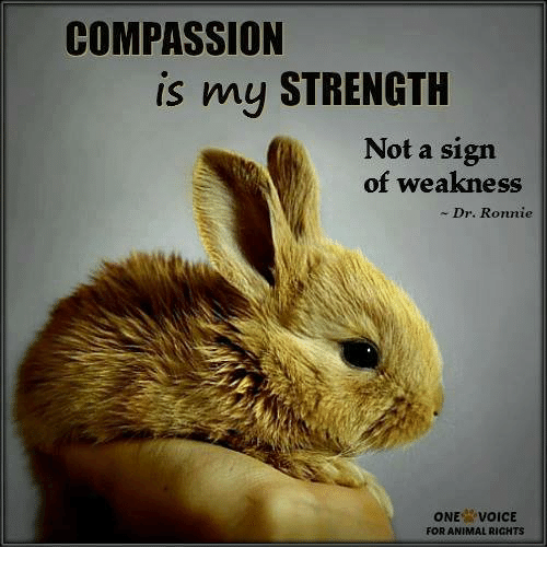COMPASSION Is My STRENGTH Not a Sign of Weakness Dr Ronnie ...