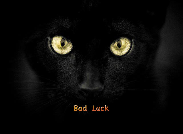 Are Black Cats Bad Luck for Football?