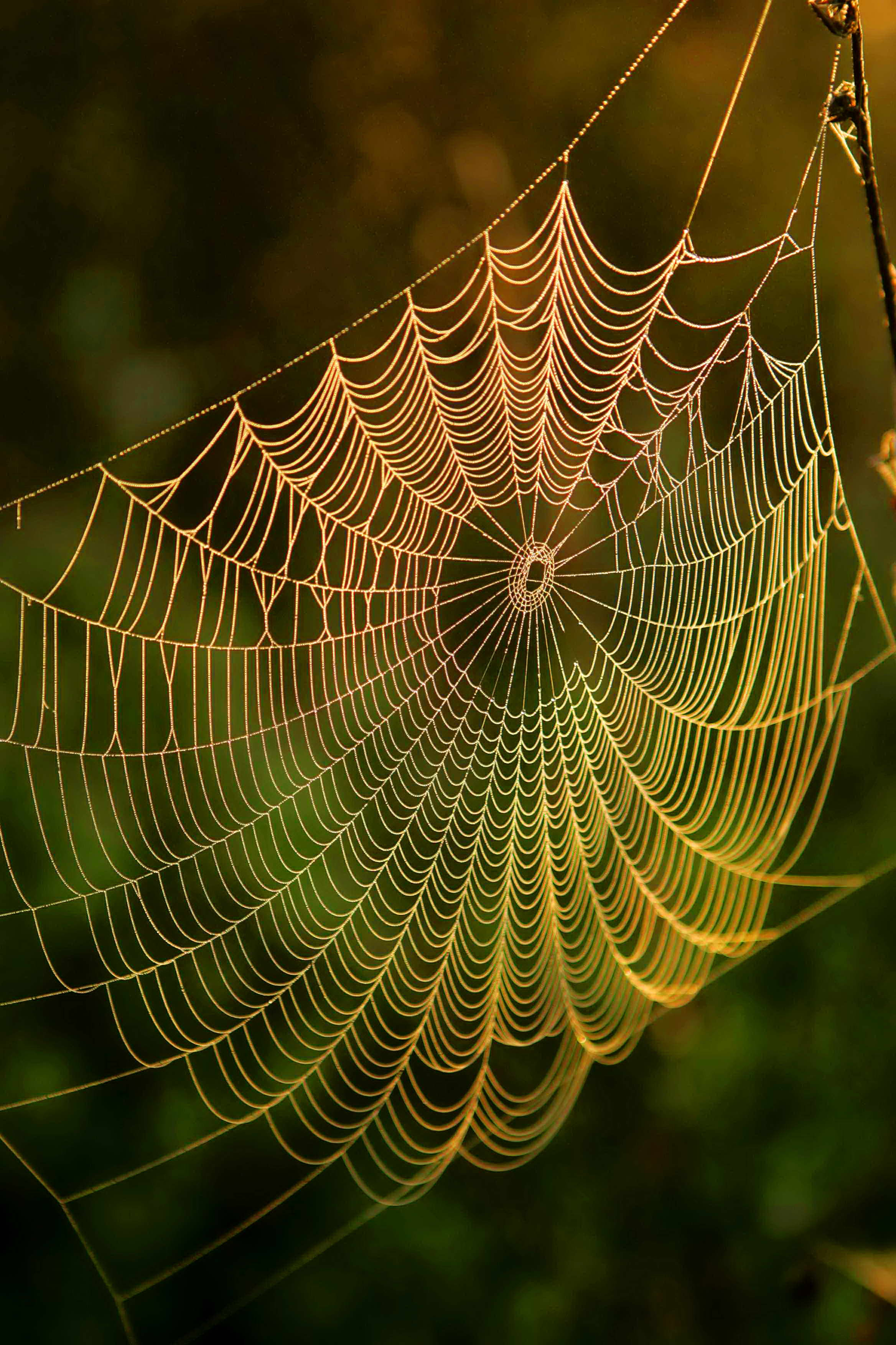 Free picture: spider, web, water, dews, sunrise