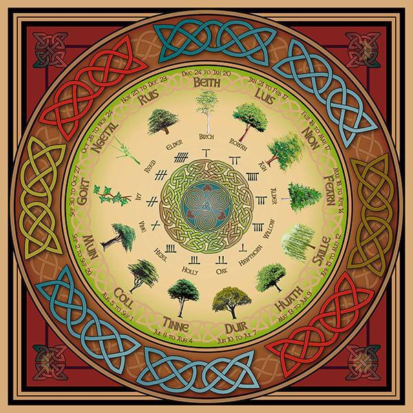 The Celtic Tree Calendar   Pagans & Witches Amino