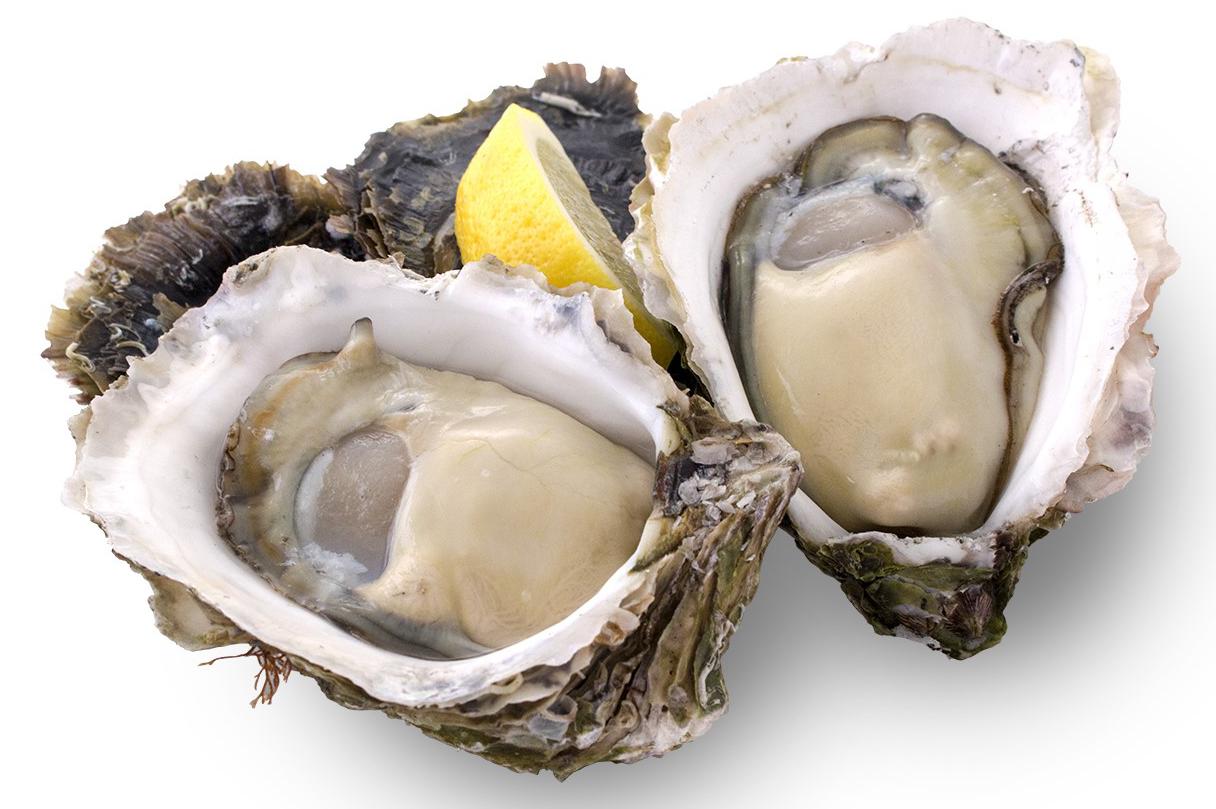 自社で養殖した岩牡蠣がいよいよ登場!初物!愛媛県産 岩牡蠣 ...