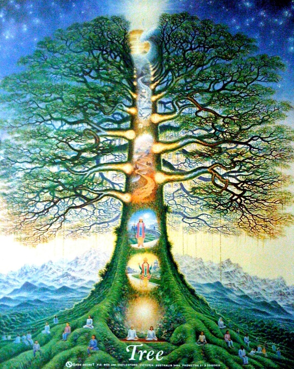 What does the tree of life symbolize? - Quora