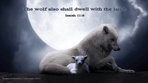 The wolf and the lamb. | Scriptures On Pictures ...