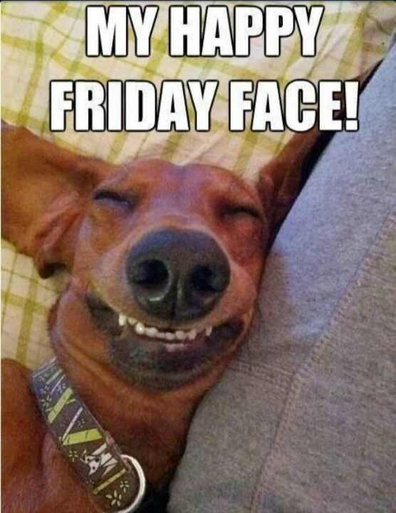 Happy Friday Face! #tgif #friday #dog #happyfriday #smile: Happy ...