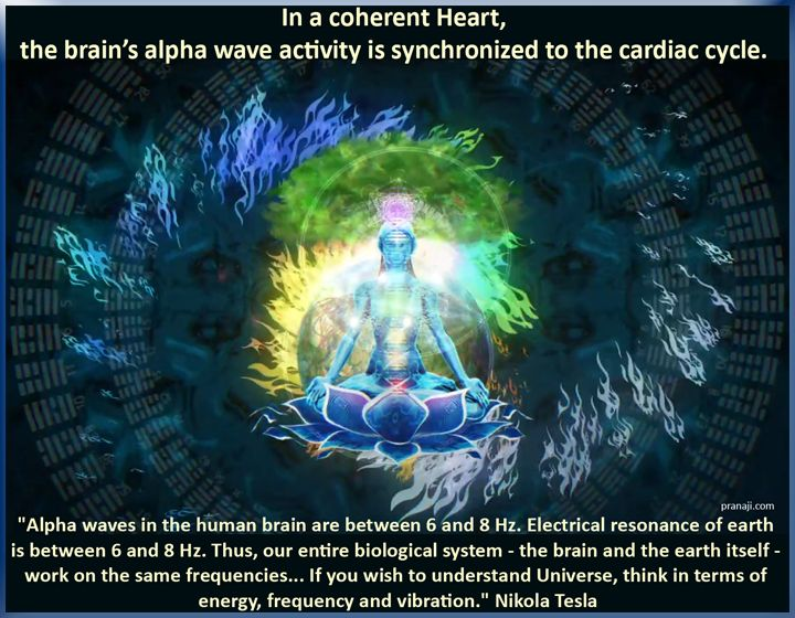 In a coherent Heart, the brain's alpha wave activity is synchronized to the cardiac cycle ...