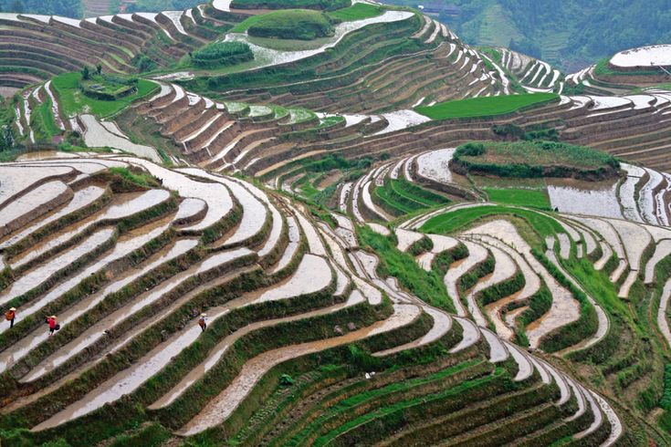 9,000 Years: Origin Of Farmed Rice Gets Pushed Back — # ...