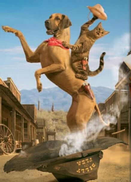 37 best images about Cats/Cowboy/Cowgirl on Pinterest