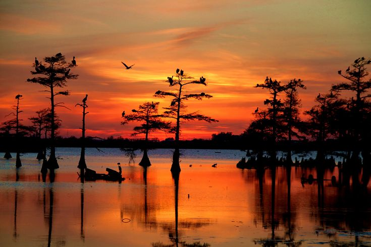 17 Best images about scuba's bayou scene tat on Pinterest ...