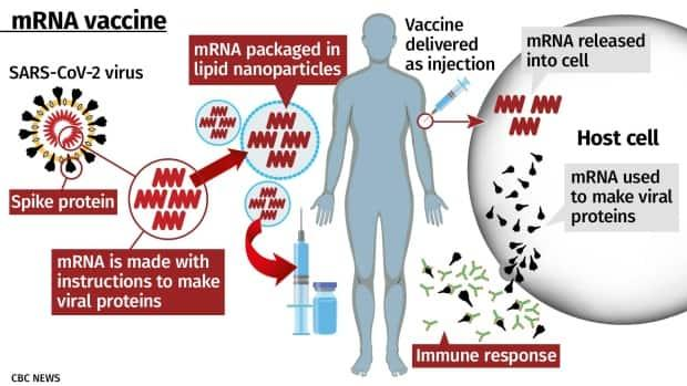 What are the side effects of Pfizer's, Moderna's vaccines ...
