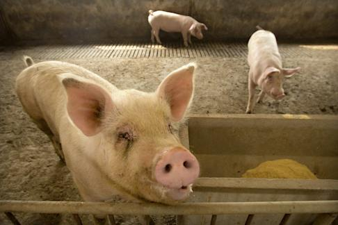 China says pork prices surged 116% in January from a year ago…