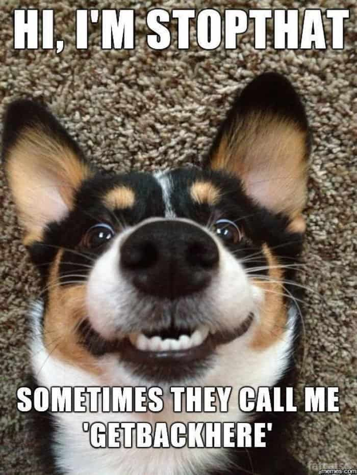 24 Hilarious Dogs with Captions to Brighten Your Day ...