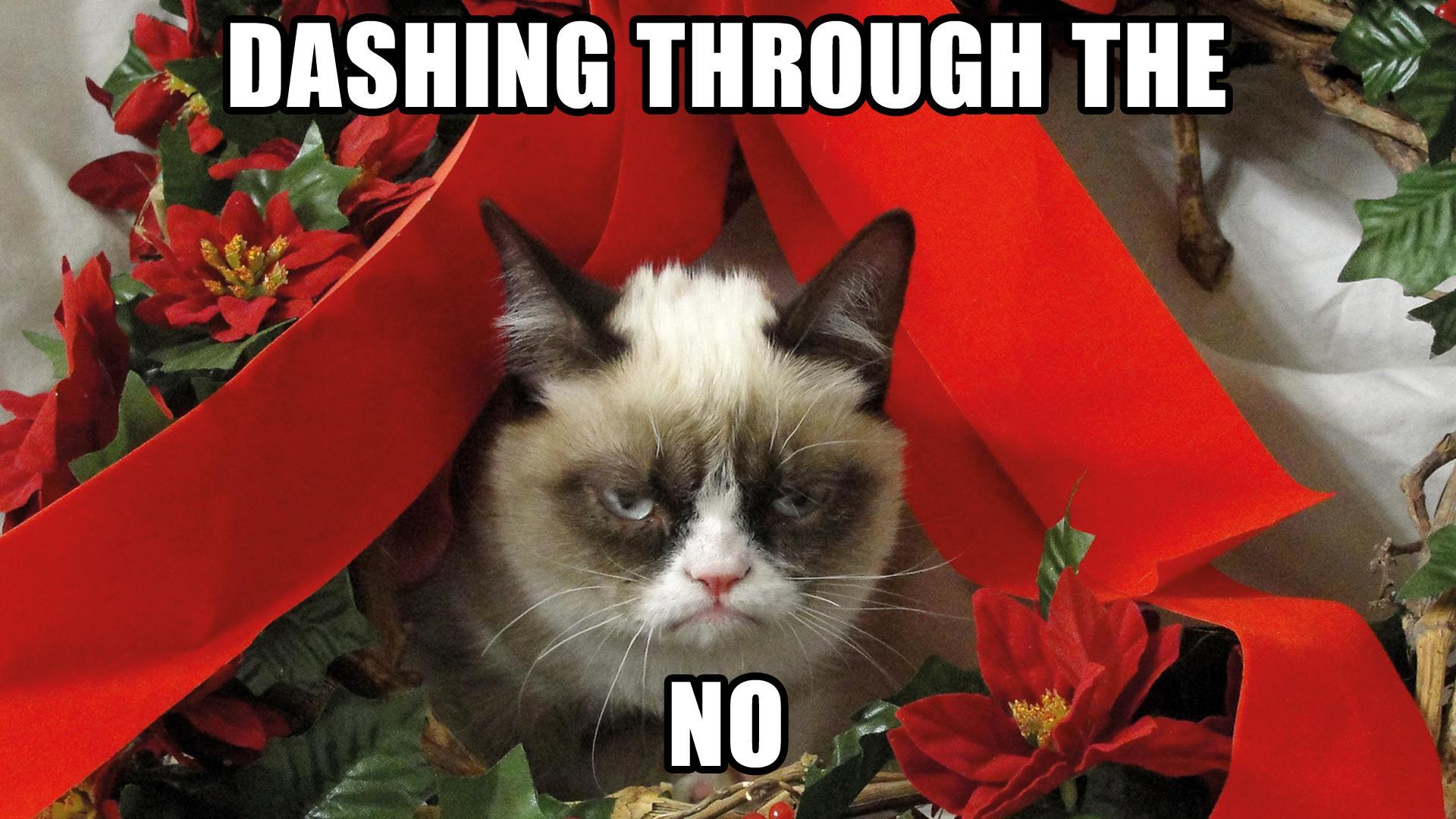 A Grumpy Cat Christmas | Sarach & Stefith