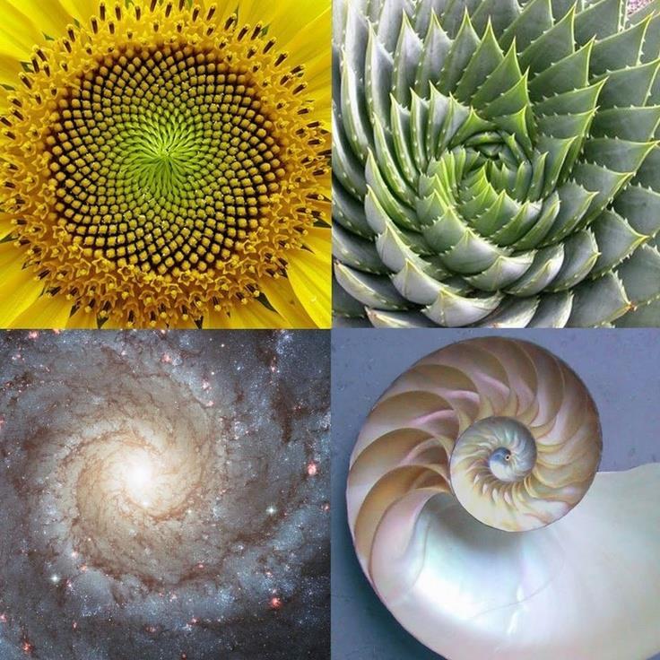 The fabulous Fibonacci sequence in nature - Science Vibe