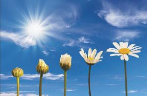 Spiritual-Evolution | Spiritual Healing ~ Delphinians Material