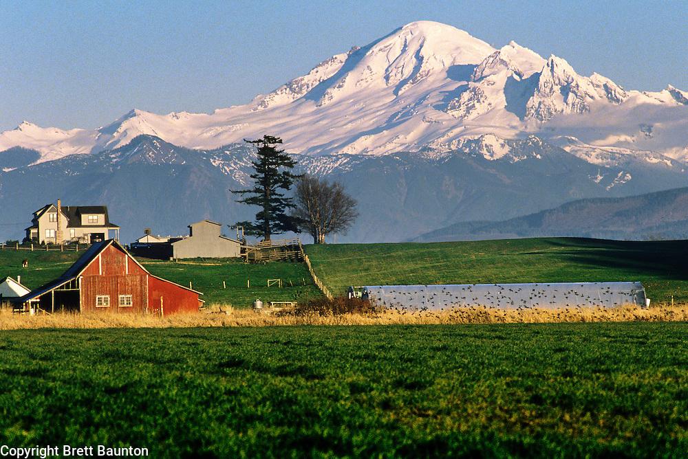Mt. Baker, Farmland, Whatcom County, Washington State | Brett Baunton