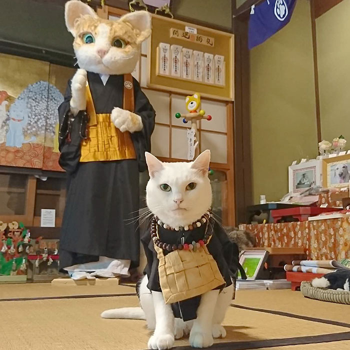 The Cat Monk of Japan