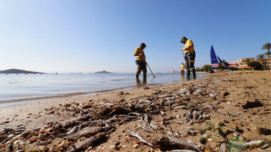 Thousands of dead fish appear in the Mar Menor lagoon and nine beaches close ?u=https%3A%2F%2Fstatic.eldiario.es%2Fclip%2F4d78905c-4923-440d-9743-b2d173788c6b_16-9-aspect-ratio_default_0