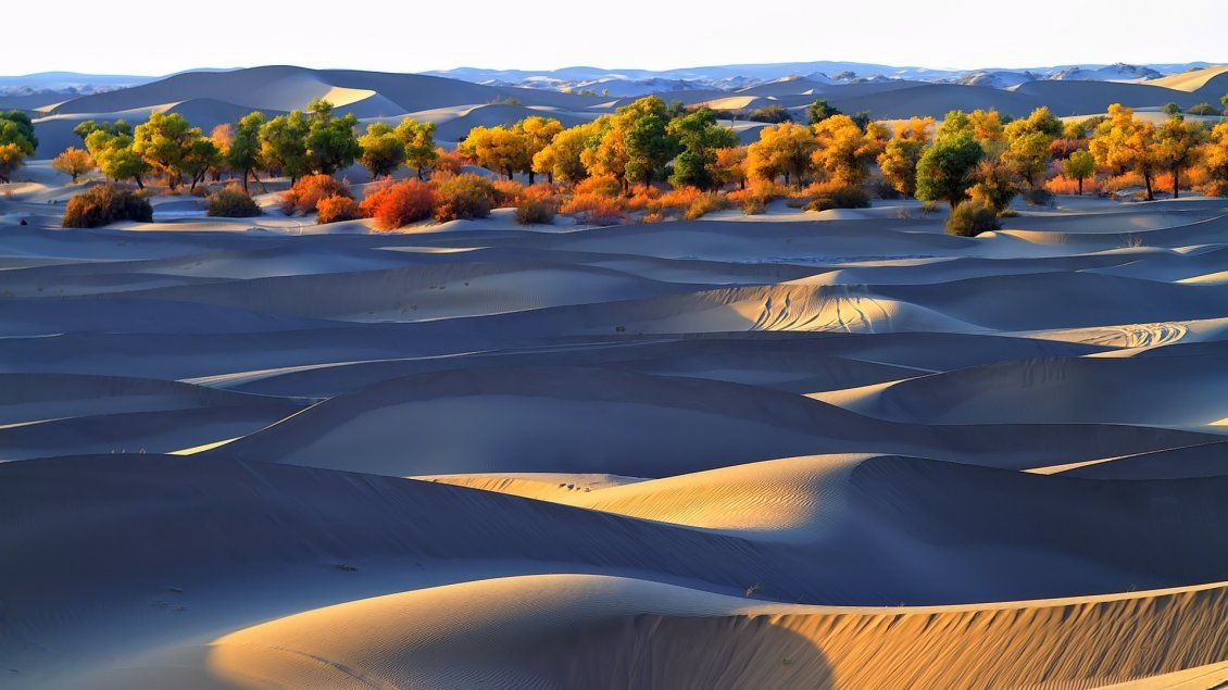 Autumn Trees in the desert HD