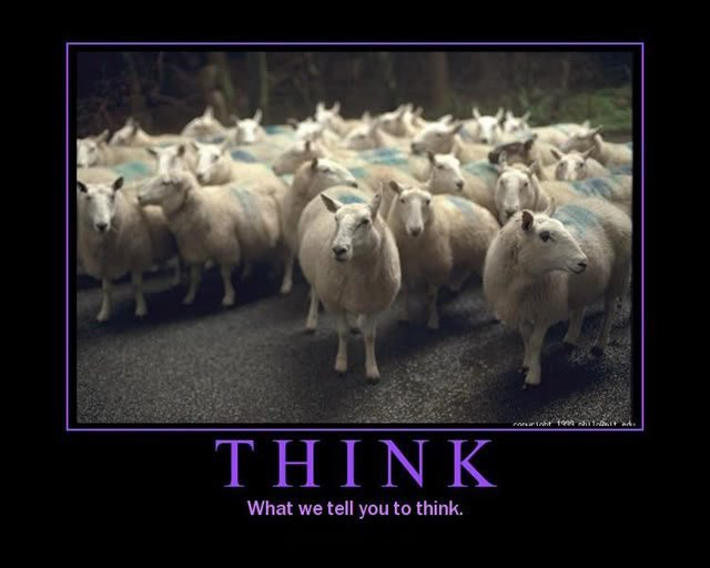 Sheep behavior and human mentality - TBU NEWS