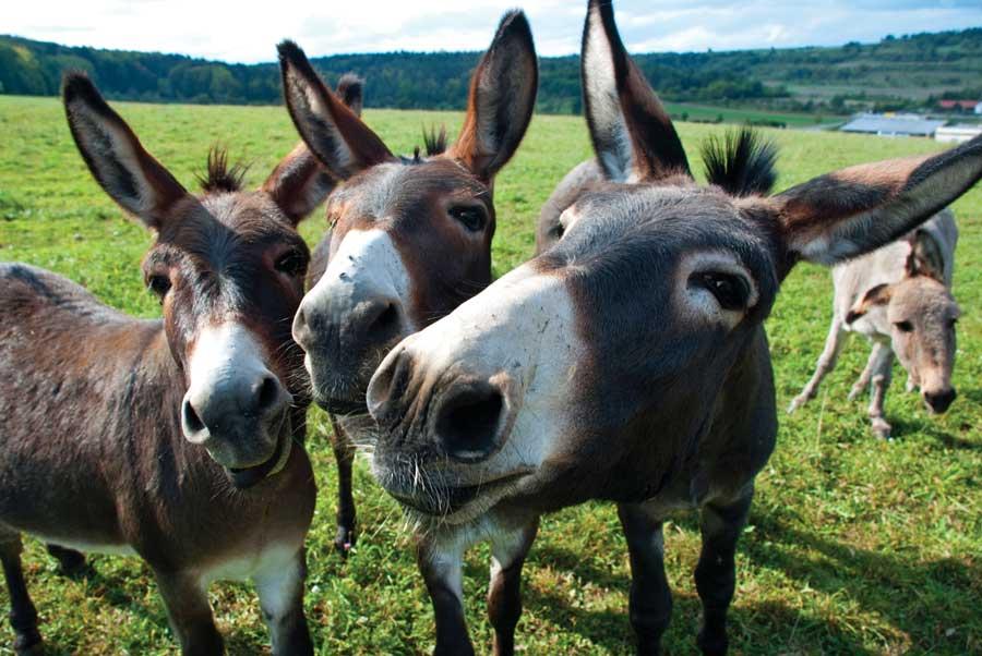 ... it like a pro – the World's best Mule's! | The Fervent Shaker