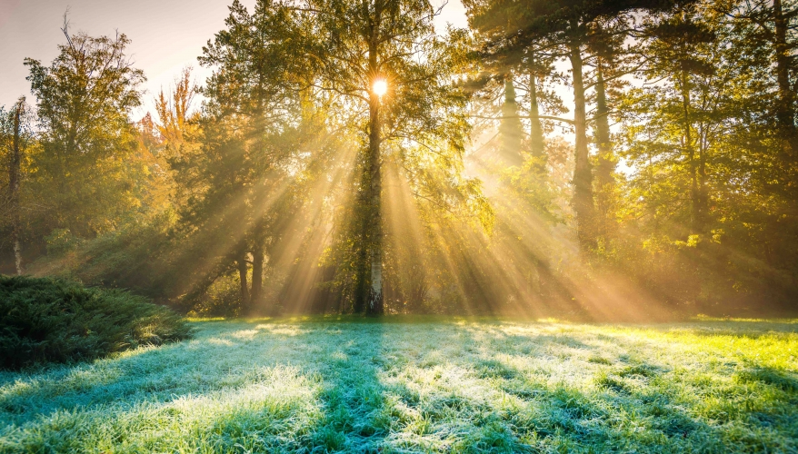 Forest Church: Where Nature and Worship Meet - The Green Parent