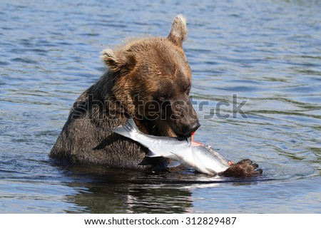 Bear Eating Stock Images, Royalty-Free Images & Vectors ...