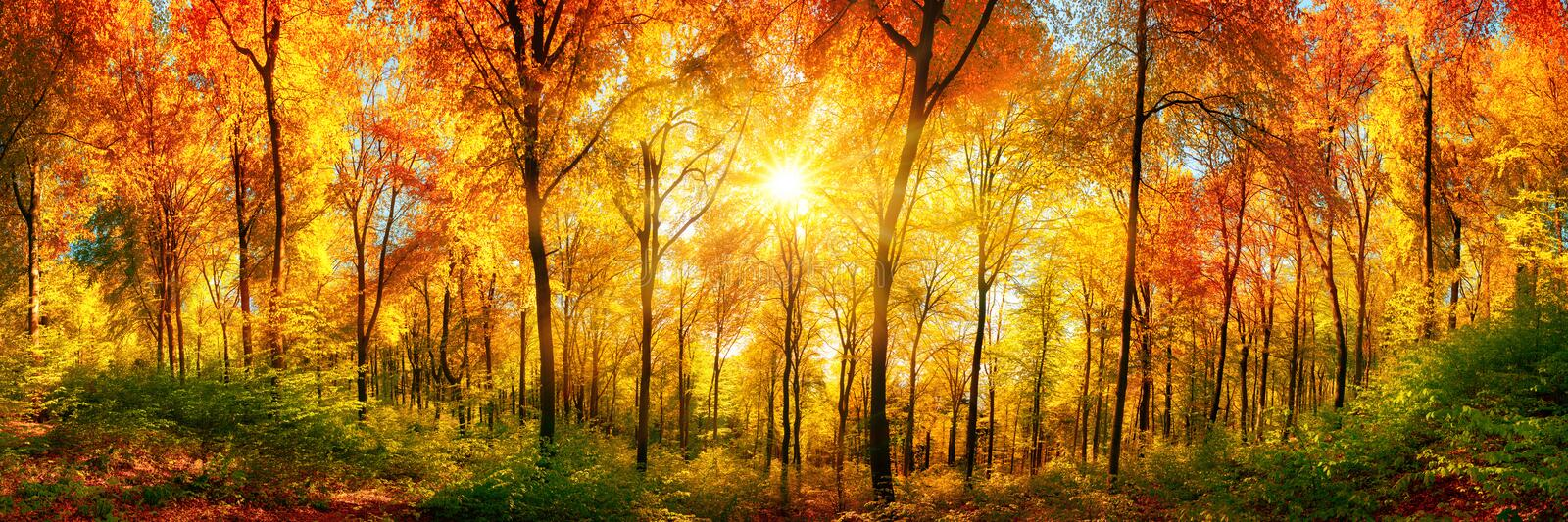 Forest panorama in autumn stock photo. Image of paradise ...