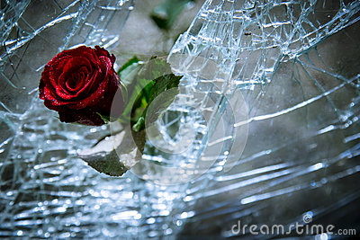 Broken Glass And Roses Stock Photo - Image: 50534471