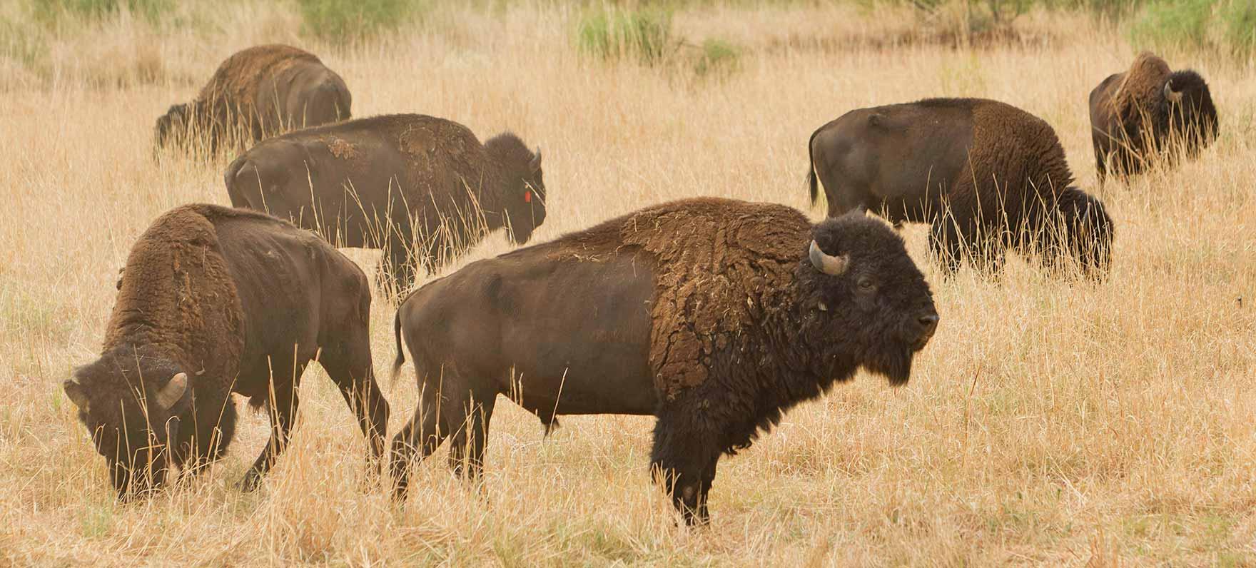 Panhandle Plains Wildlife Trail — Texas Parks & Wildlife ...