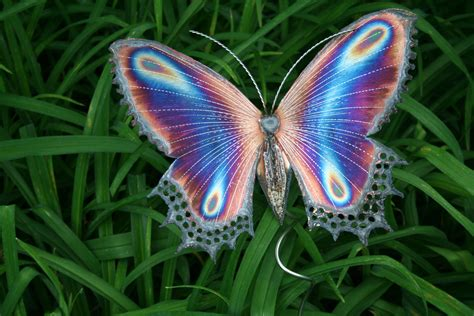 Free photo: Beautiful Butterfly - Animal, Butterfly, Fly ...