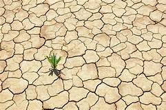 Green plant growing from cracked dry soil - Stock Photo ...