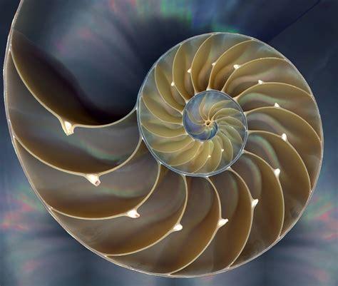 Nautilus shell. [3426x2903] : FractalPorn
