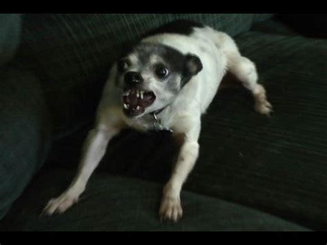 Very Angry Dog - YouTube
