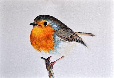 Robin Bird Drawing at GetDrawings | Free download