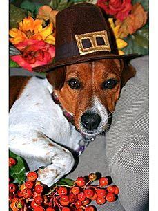 Happy Thanksgiving Puppy! | Brighten your day, Happy ...