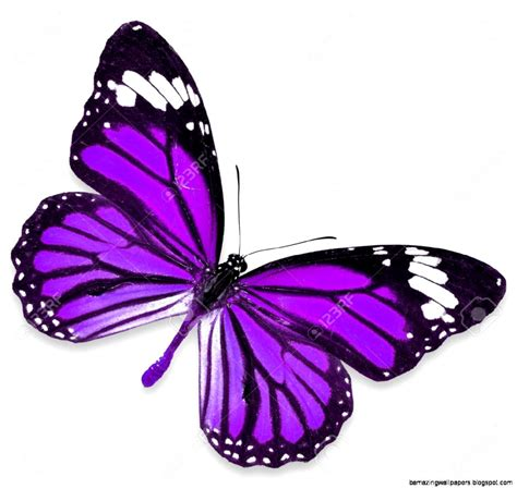 Purple Butterfly Images   Amazing Wallpapers