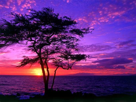 Beautiful Scenery Tree Sea Sunset Hd Wallpaper 3842 ...