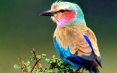 Inspirements: Most beautiful Birds of the World