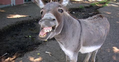 The Parable Of The Donkey | Begin with Yes