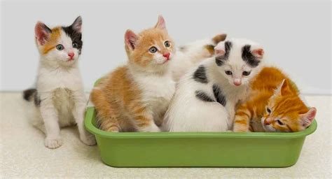 Best Litter Box For Multiple Cats That Want To Share