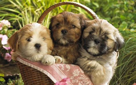 Cute Puppies 2 Wallpapers | HD Wallpapers | ID #8237