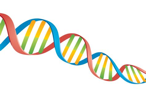 Double Helix DNA Strand By fizzgig | TheHungryJPEG.com